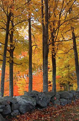 Photograph - Maple Glory by Michael Friedman