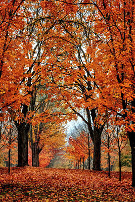 Photograph - Maple Grove by Wes and Dotty Weber
