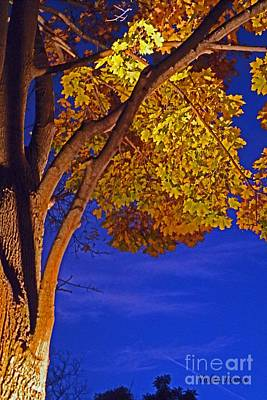 Long-lived Photograph - Maple In The Night by Violeta Ianeva