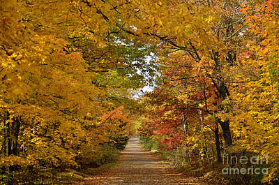 Maple Lane Art Print by Whispering Feather Gallery