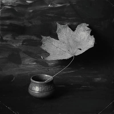 Photograph - Maple Leaf #118 by Andrey Godyaykin