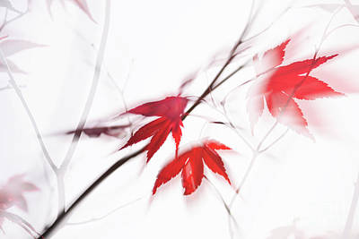 Red Maple Leaves Abstract 1 Art Print