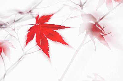 Maple Leaf Abstract 2 Art Print
