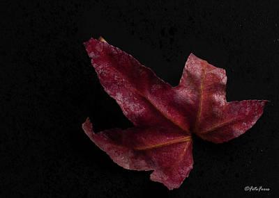 Photograph - Maple Leaf by Alexander Fedin