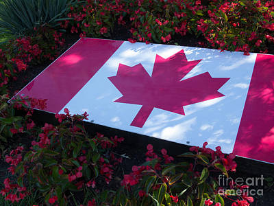 Bear Photography - Maple Leaf and Flowers by Ann Horn