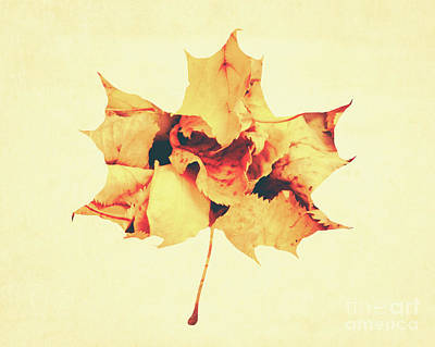Photograph - Maple Leaf by Andrea Anderegg