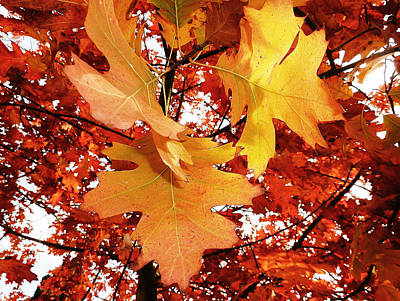 Maple Leaf Bower Art Print by Connie Handscomb