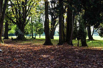 Photograph - Maple Leaf Carpet by Tom Cochran