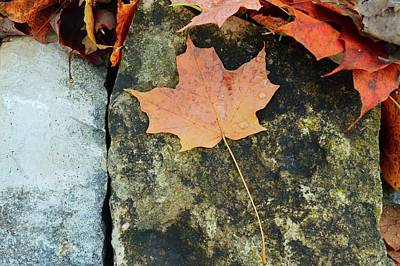 Photograph - Maple Leaf On A Rock by Lyle Crump