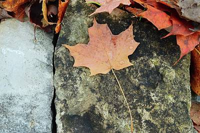 Digital Art - Maple Leaf On A Rock Two  by Lyle Crump