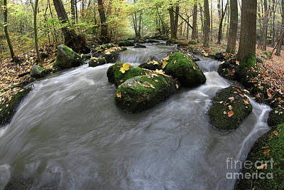 Photograph - Maple Leaf On Boulder In Stream by Michal Boubin