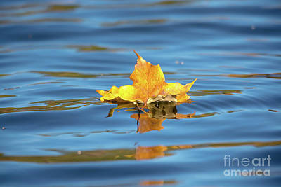 Photograph - Maple Leaf On The Lake by Cheryl Baxter