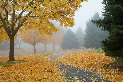 Photograph - Maple Leaf Path by Idaho Scenic Images Linda Lantzy