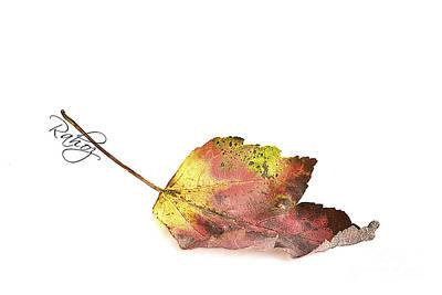 Maple Leaf Art Print by Rahat Iram