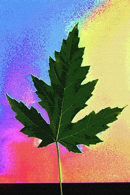 Digital Art - Maple Leaf Summer And Fall by Tom Janca