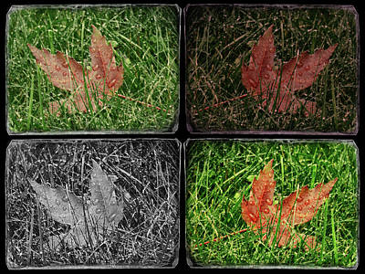 Digital Art - One Leaf - Four Takes by Leslie Montgomery