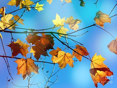 Photograph - Maple Leafs by France Laliberte
