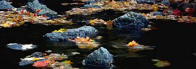 Maple Leaves-0008 Art Print by Sean Shaw
