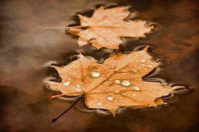 Photograph - Maple Leaves And Drops Pnt by Theo O'Connor