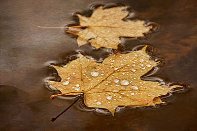 Photograph - Maple Leaves And Drops Txt by Theo O'Connor
