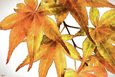 Digital Art - Maple Leaves by Barry Jones