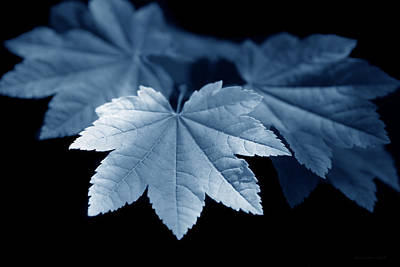 Photograph - Maple Leaves Blue by Jennie Marie Schell