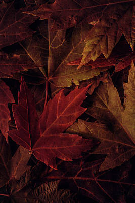 Photograph - Maple Leaves by Erica Kinsella