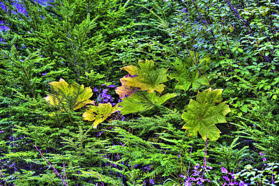 Photograph - Maple Leaves Hdr by Richard J Cassato