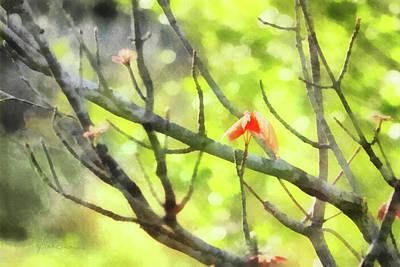 Digital Art - Maple Leaves In Spring by Francesa Miller