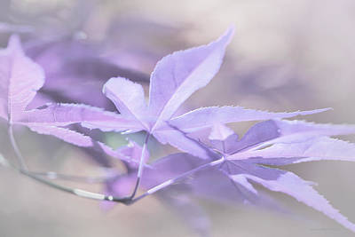 Photograph - Maple Leaves Lavender Pastel Abstract by Jennie Marie Schell