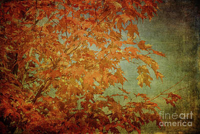 Photograph - Maple Leaves by Lois Bryan