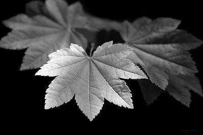 Photograph - Maple Leaves Monochrome by Jennie Marie Schell