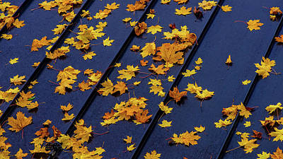Photograph - Maple Leaves On A Metal Roof by Joe Shrader