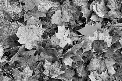 Photograph - Maple Leaves On The Ground Bw  by Lyle Crump