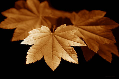 Photograph - Maple Leaves Orange by Jennie Marie Schell