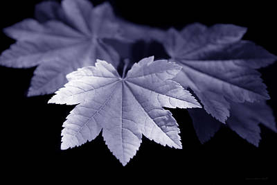 Photograph - Maple Leaves Purple by Jennie Marie Schell