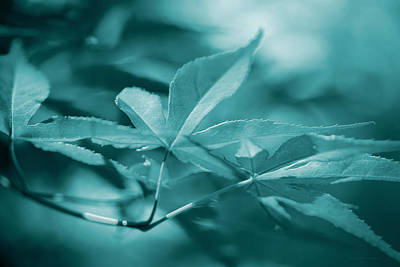 Photograph - Maple Leaves Teal Monochrome by Jennie Marie Schell