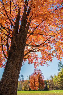 Photograph - Maple Madness by Peg Runyan