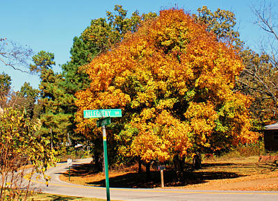Photograph - Maple On The Corner by Rick Friedle