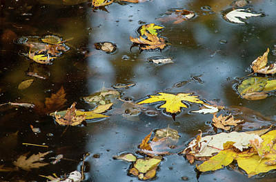 Photograph - Maple Reflections by Brian Green