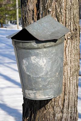 Sugaring Photograph - Maple Sap Pail by Larry Landolfi