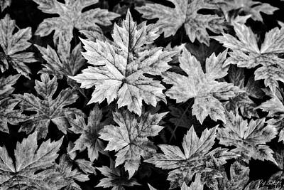 Featured Tapestry Designs - Maple Saplings Ground Cover by Phill Doherty