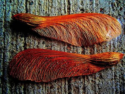 Maple Seed Pair Art Print by Beth Akerman