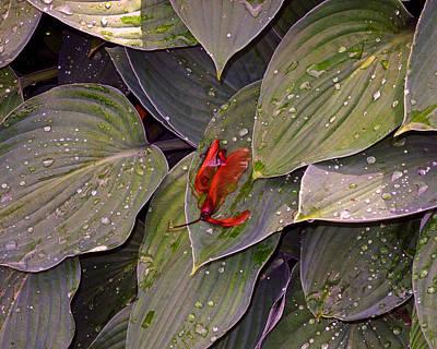 Photograph - Maple Seeds After The Rain by Lynda Lehmann