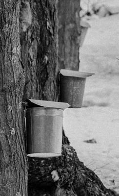 Photograph - Maple Sugaring Days by Brian MacLean