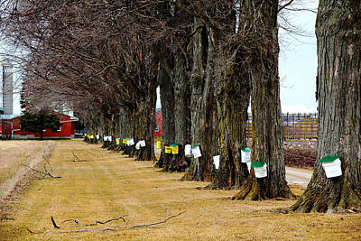 Photograph - Maple Syrup Traditional Tapping by Debbie Oppermann