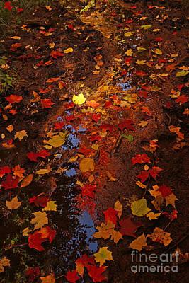 Photograph - Maple Trail by Joshua McCullough