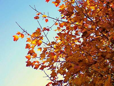 Photograph - Maple Tree In October by Lisa Gilliam