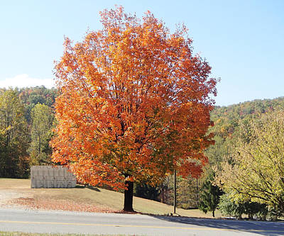 Photograph - Maple Tree In The Parking Lot by Becky Erickson