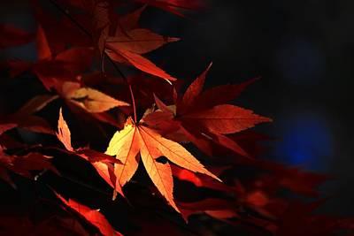 Photograph - Maple Tree Leaves I by Carol Montoya